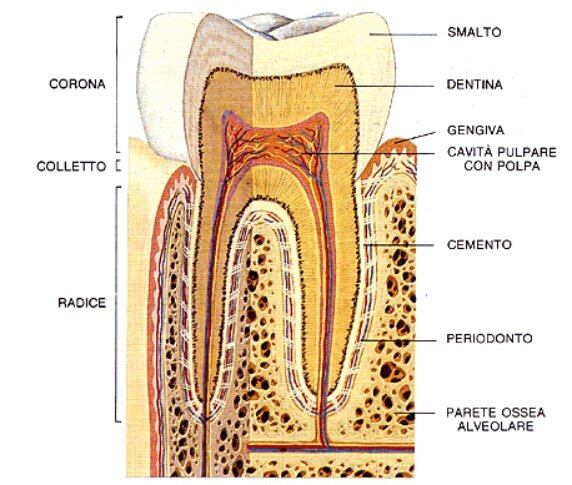 dentista genova dente